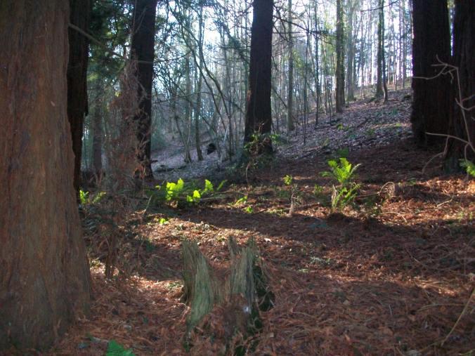Woodland at The Hurst, Arvon