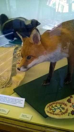 foxincase
